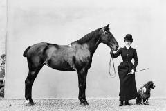 Tra cavalli, illustrazioni, Dante e … quel che resta!