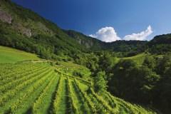 Bottega diventa sostenitore della Fondazione Slow Food per la biodiversità